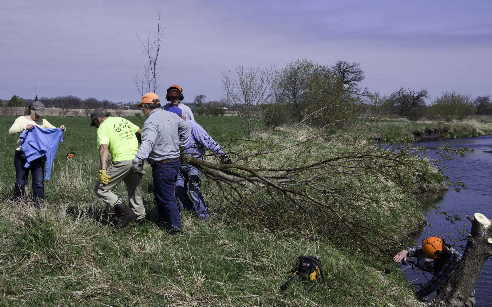 Worday volunteers pulling tree out of stream